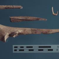 44RN0002_bone_artifacts.jpg