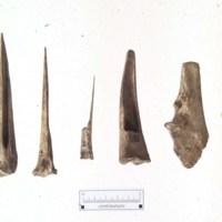 44HA0065_John_Wells_bone_awls_excavation.jpg