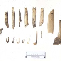 44HA0065_John_Wells_bone_fishhooks&_residue_excavation.jpg